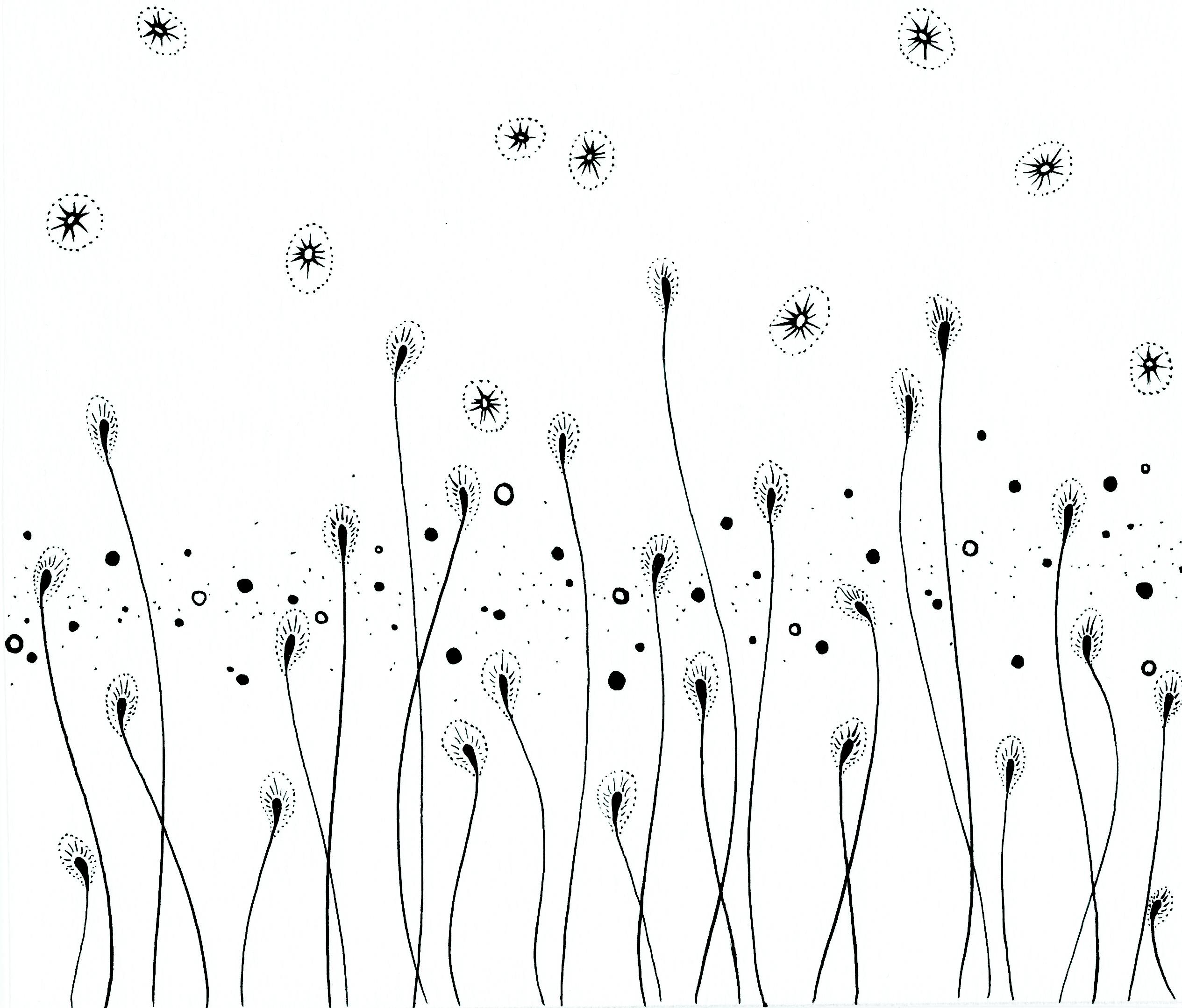 Elisa viotto semi di fiori elisa viotto for Semi di fiori
