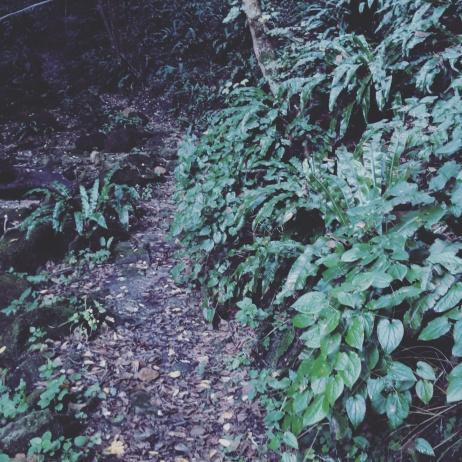 secret path3